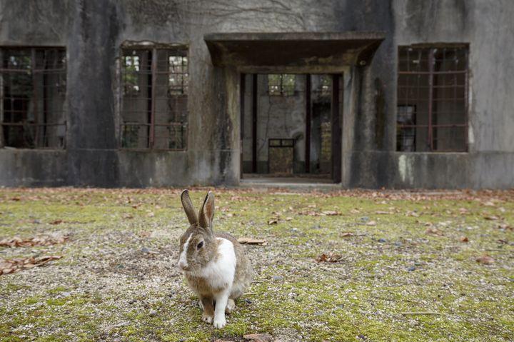 異世界すぎる離島へ行こう!うさぎと廃墟でできた広島の離島「大久野島」とは