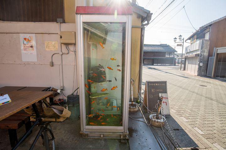 まさに金魚だらけな街!奈良の「柳町商店街」がとにかく金魚づくしだった