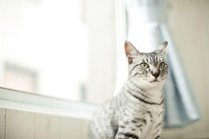 可愛すぎて悶絶!渋谷の猫カフェ「MoCHA(モカ)」で子猫と戯れよう