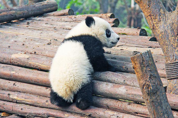パンダに逢えるよ!「アトランタ動物園」絶滅危惧種カルーセルも人気!