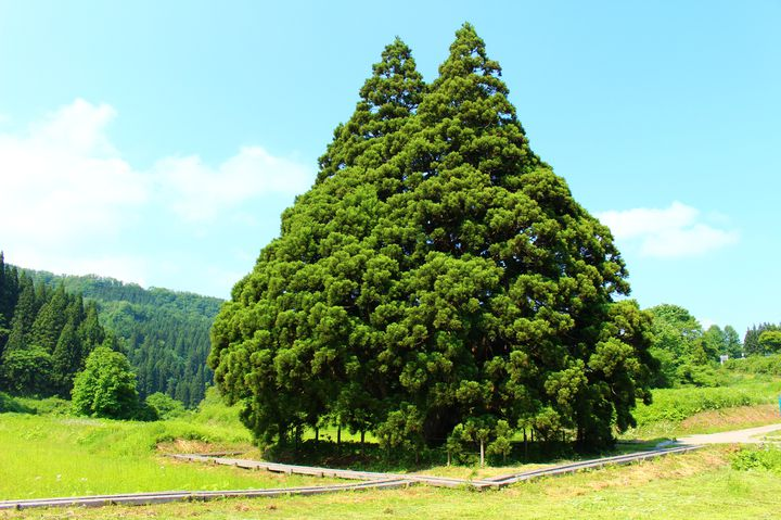 愛知県にトトロの世界が!「ジブリパーク」愛・地球博記念公園に登場