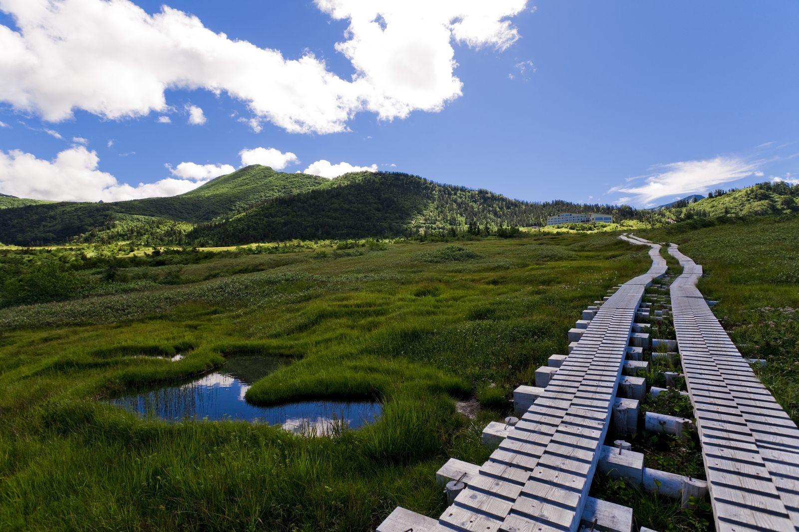 鮮やかな緑と、透き通った空気の中を歩くのも、これからの季節ならではの楽しみ。高所を抜ける立山黒部アルペンルートは、真夏の最高気温でも20度以下と涼しく、ウォーキングにも最適。写真は、室堂から富山側に向かうバスルートの途上にある「弥陀ヶ原」。ラムサール条約にも登録された湿原に、夏はワタスゲ、タテヤマリンドウといった愛らしい花々が咲き誇ります。