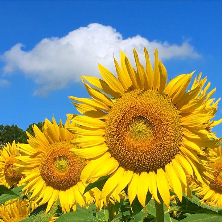 暑い夏は絶景で癒されよう!関東の夏にしか見られない絶景10選はこれだ
