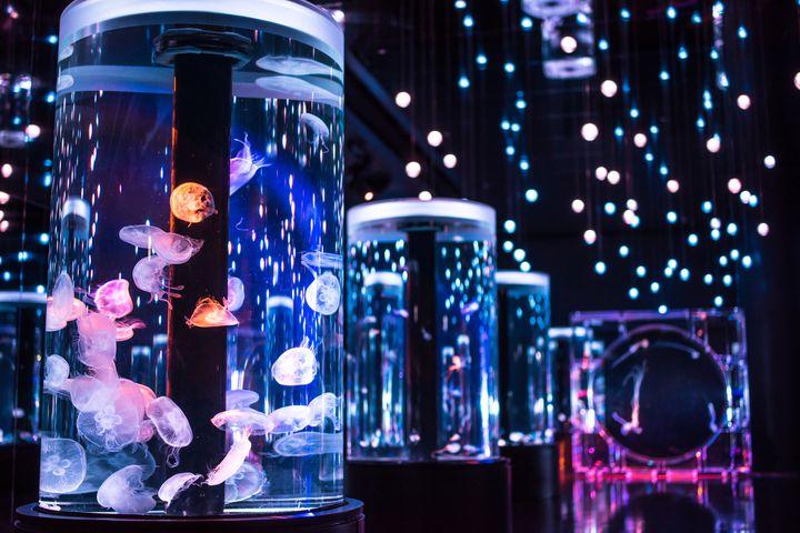 どこも同じだと思ってない?行くべき東京近郊でおすすめしたい水族館10選