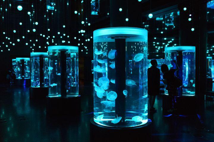 この冬のデートはここで決まり!冬デートにおすすめな東京都内の水族館7選