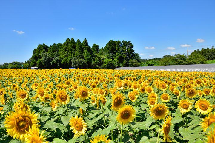 楽しい魅力が盛りだくさん!千葉県「成田ゆめ牧場」はこの夏こう楽しむ