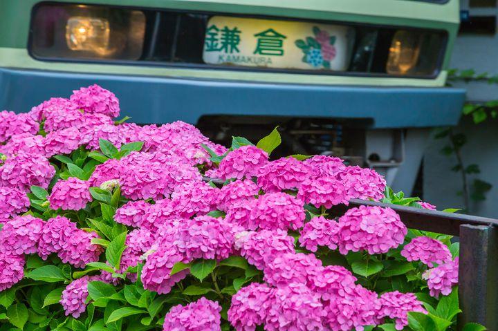 """紫陽花を見に行きたい!失敗しない""""鎌倉1日プラン""""はこれで決まり"""