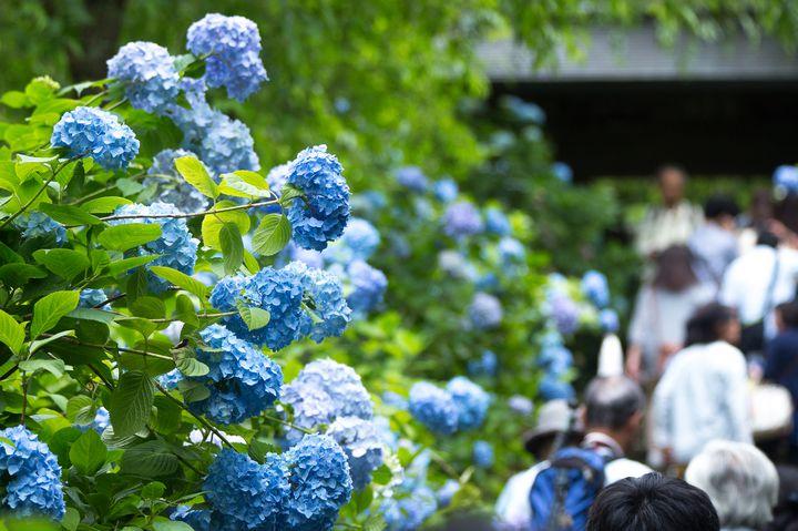 デートにおすすめ!関東地方の「5~7月が見頃」な花畑スポットまとめ