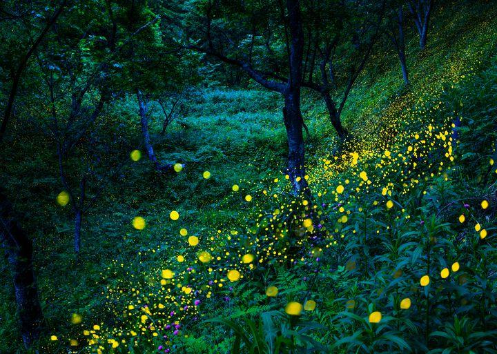 """忘れられない夏にしよう。日本国内の美しすぎる""""夏の絶景""""30選"""