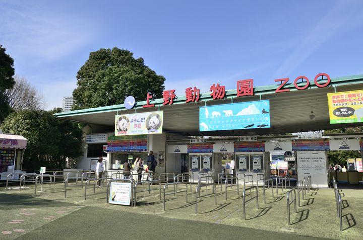 胸のワクワクが止まらない!上野動物園で「真夏の夜の動物園」開催