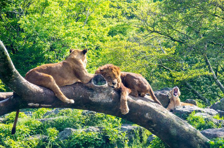 大人になっても行きたい!おでかけにピッタリな日本全国の「動物園」7選