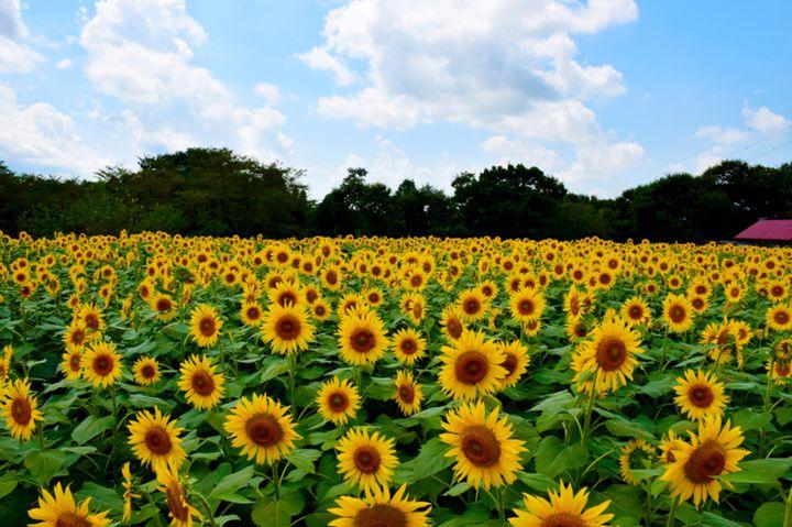 """絆を深めて最高の夏に。この夏関東地方で""""友達と一緒にしたいこと""""リスト"""