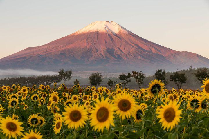 富士山ドライブと花の絶景。一日使って行きたい山梨ドライブデートコースはこれだ