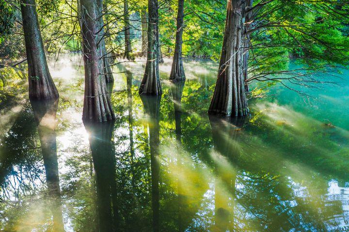 SNSで話題沸騰中!福岡にある「篠栗九大の森」ってどんなところ?