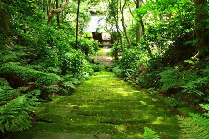1人でのんびり歩きたい。地元の人に聞いた神奈川の7つの穴場スポットをご紹介