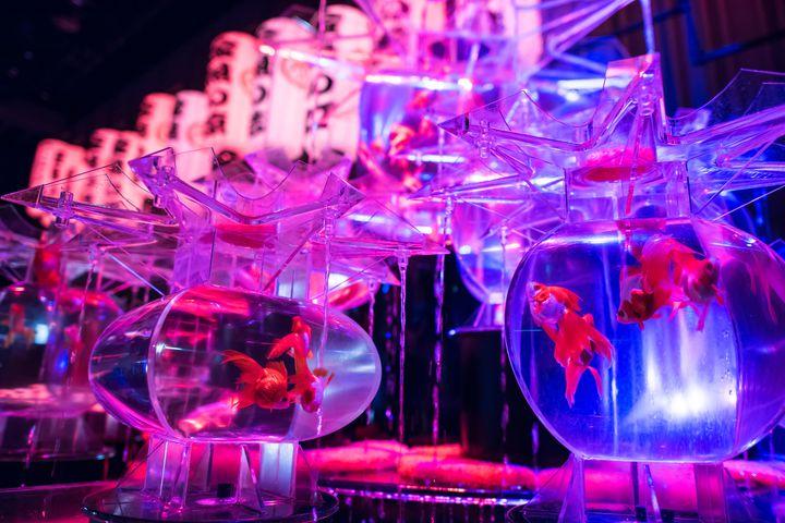 日本橋は今年が最後!「アートアクアリウム」東京&熊本で開催