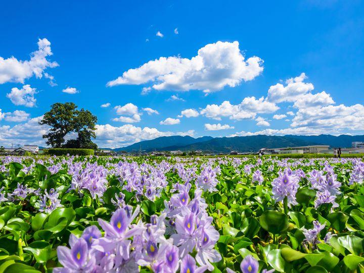 週末旅行はここで決まり!9月に見ることができる日本国内の絶景10選
