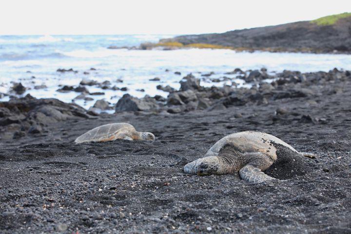 この海岸はウミガメに出会えるビーチとしても有名。運が良ければ、甲羅を乾かしに砂浜に上がってきたウミガメたちに遭遇するかもしれませんよ! ただし、見かけても触らずにそっと見守りましょう。