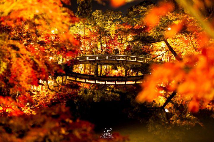 今年の秋は、特別にしたいから。2017年の京都の紅葉名所7選