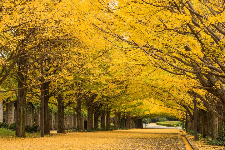 """【開催中】深まる秋と冬の訪れ。東京都内の""""11月に行きたいイベント""""まとめ"""