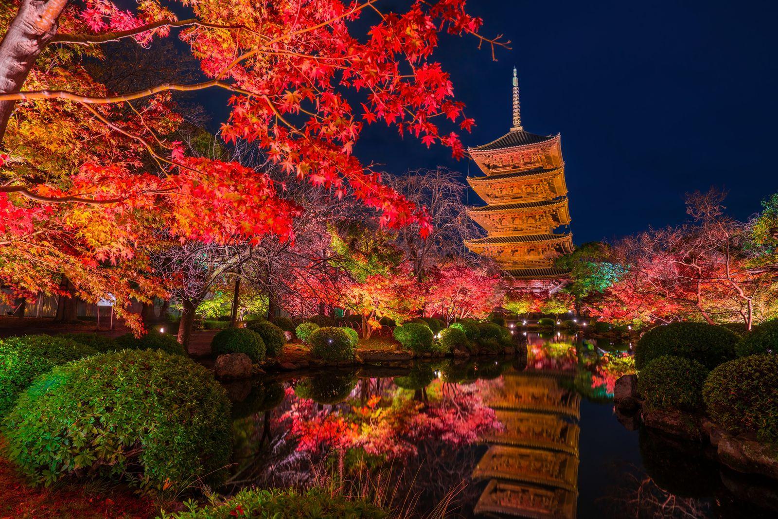 """秋天的小店_秋の絶景をあなたと。京都の""""紅葉ライトアップイベント""""8選 ..."""