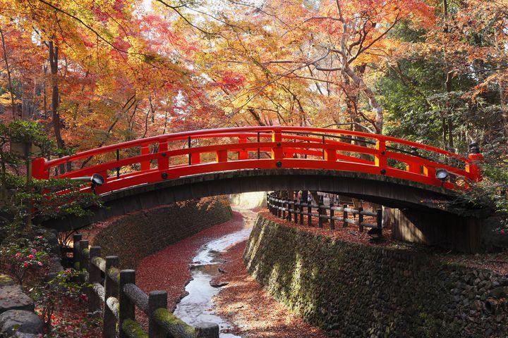 魅力しかない秋の京都へひとり旅。京都通かつ写真好きが教える2泊3日プラン