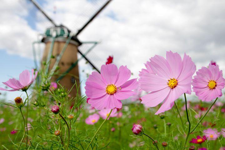 可愛い秋の花に囲まれたい!関東で見られるヒガンバナ・コスモス花畑7選