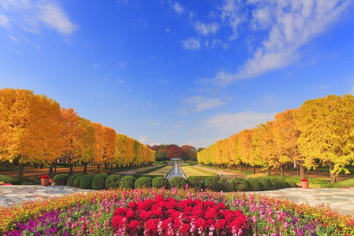 """秋めく紅葉とふたりの恋。""""秋""""の関東近郊日帰りデートで行きたい10のスポット"""