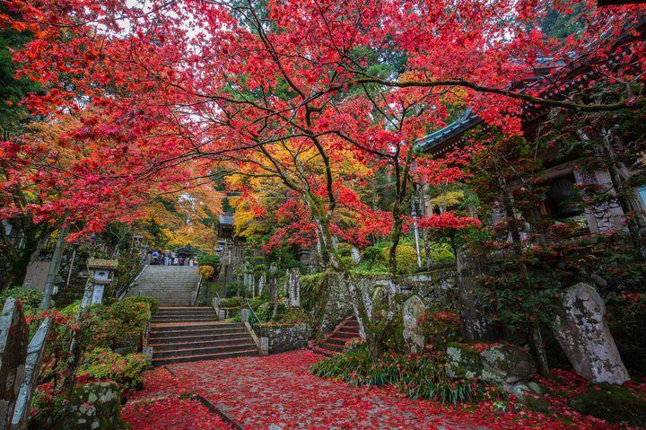 今年の紅葉は箱根で見よう!箱根のゆっくりと紅葉が鑑賞できるスポット10選