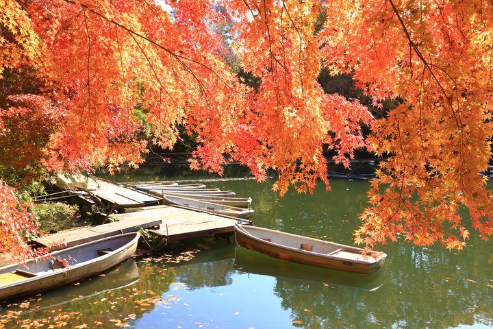 秋の休日は紅い世界へ旅に出る。神奈川のおすすめ紅葉狩りスポット7選