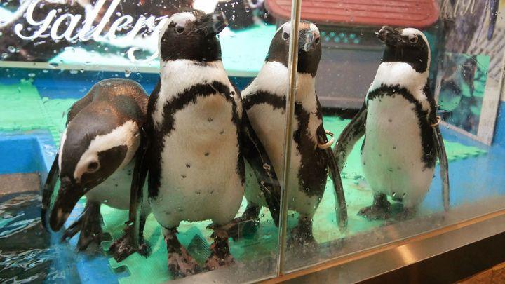 遊び心満載の新体験!池袋「ペンギンのいるBAR」のペンギンがとにかく癒される