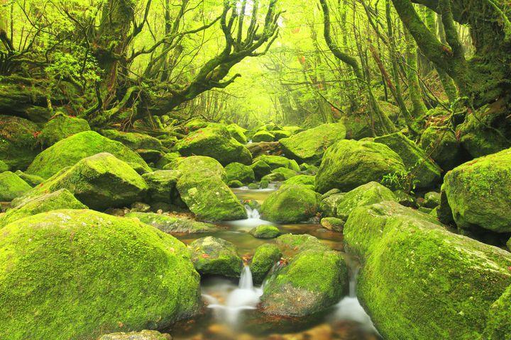 """癒しを求める旅好きのあなたに。日本の""""美しき緑の絶景""""10選"""