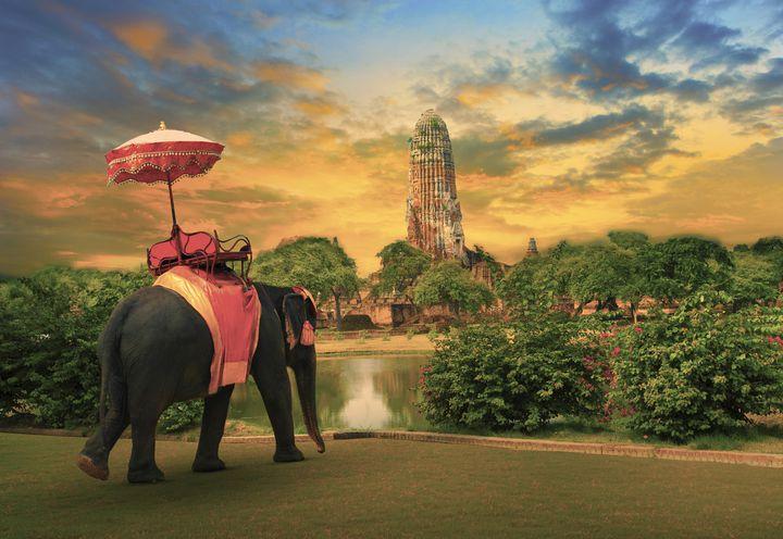 """タイ旅行のマストはこれ!アユタヤで""""エレファントライド""""がしたい"""