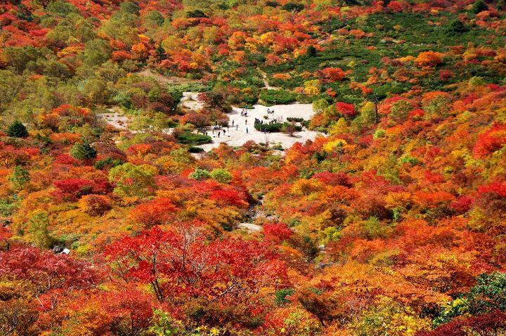 真っ赤な景色を見に行こう!日本の美しすぎる紅葉を見られる山8選