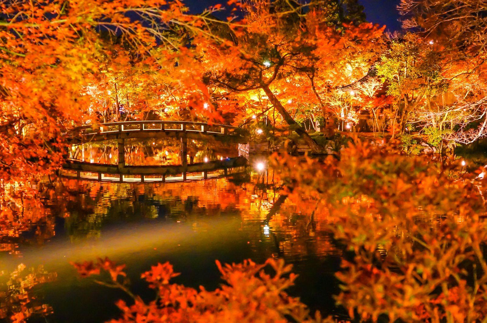 京都 紅葉 2020