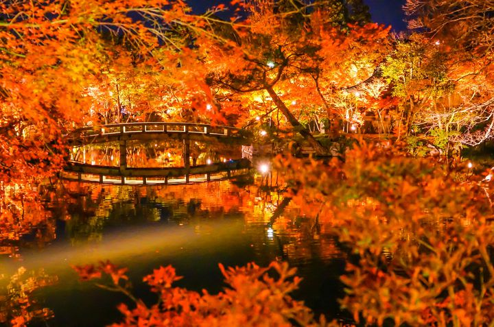 秋夜に浮かぶ古都の絶景。2020年京都紅葉ライトアップ名所まとめ