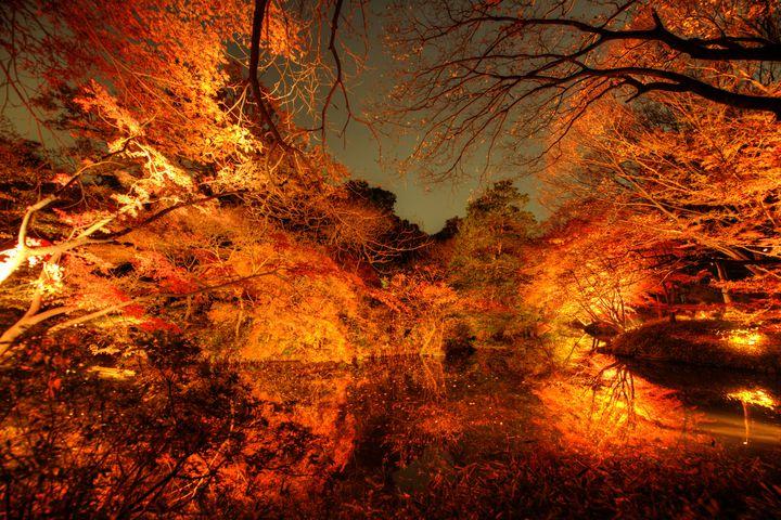 秋色に色づいた東京は美しい。東京都内で紅葉を堪能できるスポット7選