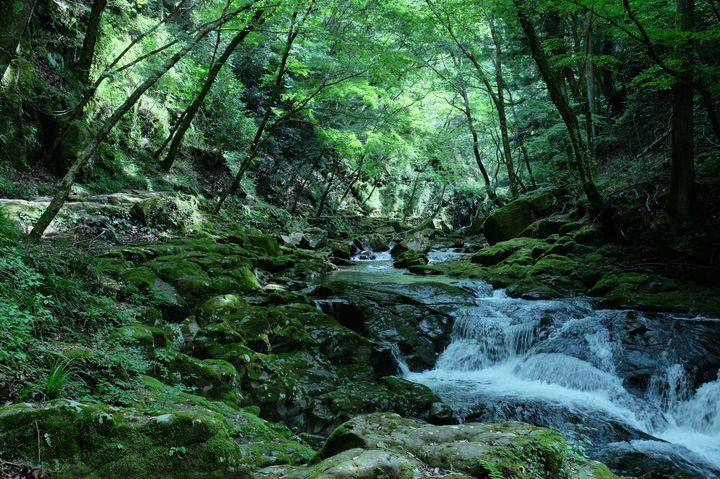 自然に囲まれた深山幽谷を歩く。三重の山間部を流れる「赤目四十八滝」とは