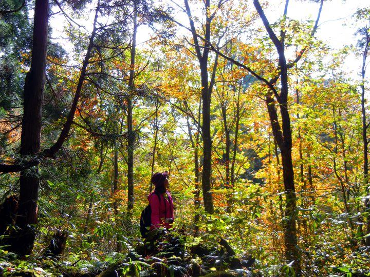 「森林浴の森・日本100選」に選ばれた!立山黒部アルペンルートの美女平