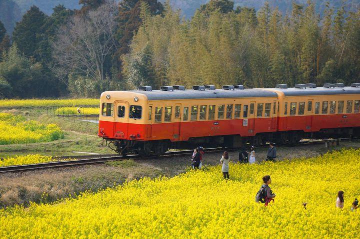 ローカル線で巡りたい。この春おすすめの全国の「レトロ電車旅」10選