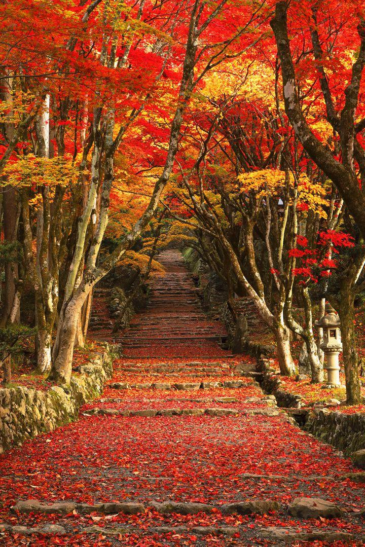 """秋なんて一瞬だよ。働き者""""大阪OLさん""""に教える最低限押さえたい秋の7つの癒し"""