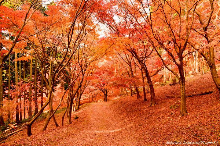 """藤の花だけじゃない?実は""""河内藤園""""は秋も魅力抜群の観光スポットだった"""