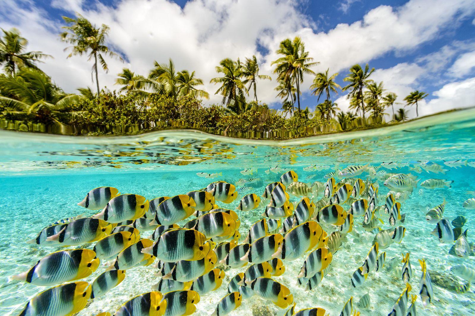 タヒチの魅力は、なんといっても透明度の高い海。どの島も見渡すかぎりエメラルドグリーンの海が広がっています。年間平均気温は約27度、平均水温も26度と暖かいので、一年中泳ぐことができますよ。
