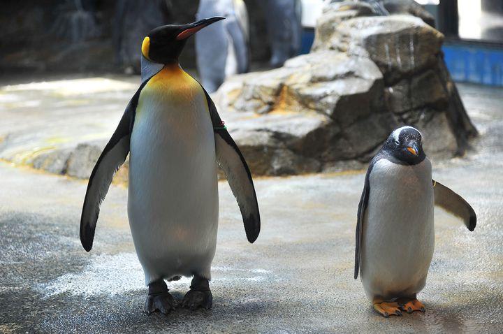 家族連れにとても人気!長崎でおすすめしたい水族館3選