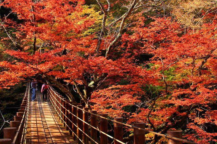"""絶景つり橋を求めて。リフレッシュにぴったり""""高萩の日帰りドライブプラン"""""""