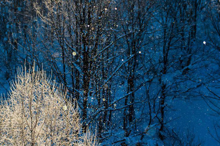寒いからこそ美しい。北海道の冬の絶景スポット8選《札幌・小樽・美瑛編》
