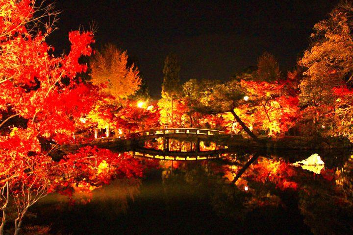 紅葉は昼と夜と二度おいしい。一度は行きたい、関西地方の紅葉ライトアップ10選