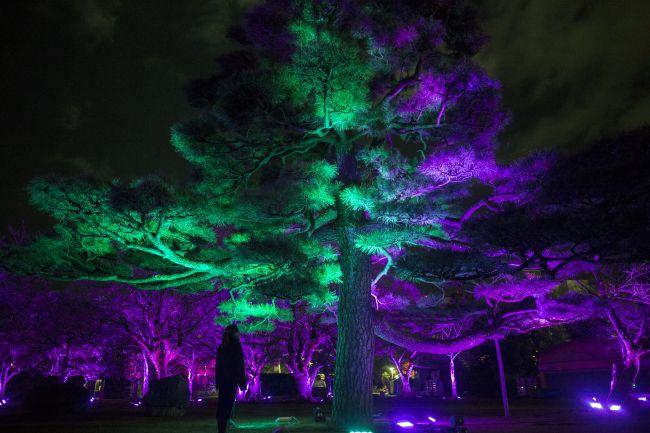 """【終了】""""阿波踊り""""がモチーフのアートも!徳島で「チームラボ 川と森の光のアート祭」開催"""