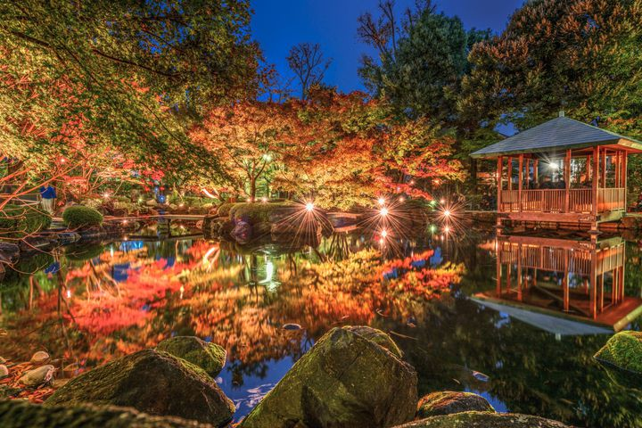 【終了】今年はまったり楽しみたいあなたへ。東京の穴場紅葉スポット「大田黒公園」がおすすめ