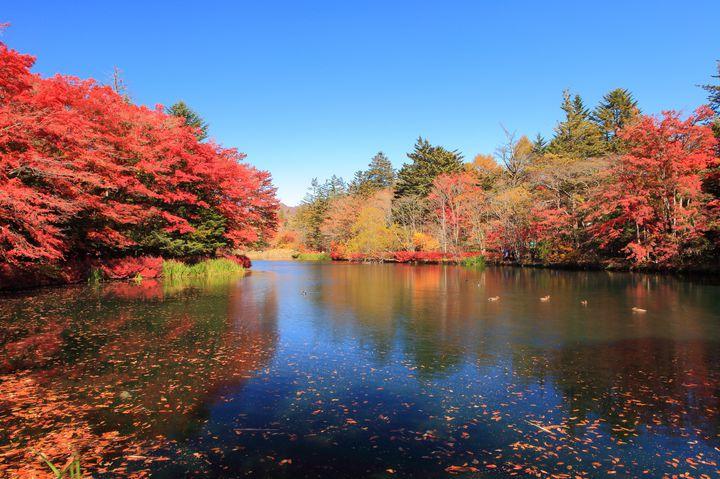 気軽に散策したい、癒される軽井沢の紅葉名所ランキングTOP7